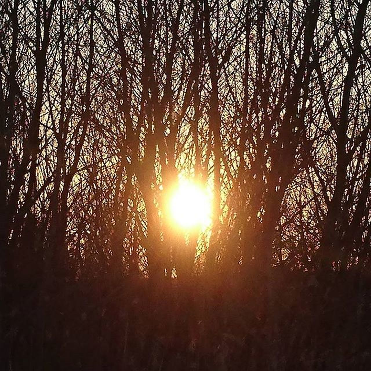 tree, nature, sun, forest, sunlight, lens flare, silhouette, sunbeam, growth, beauty in nature, sunset, tranquility, scenics, tranquil scene, outdoors, no people, low angle view, tree area, landscape, day, branch, sky