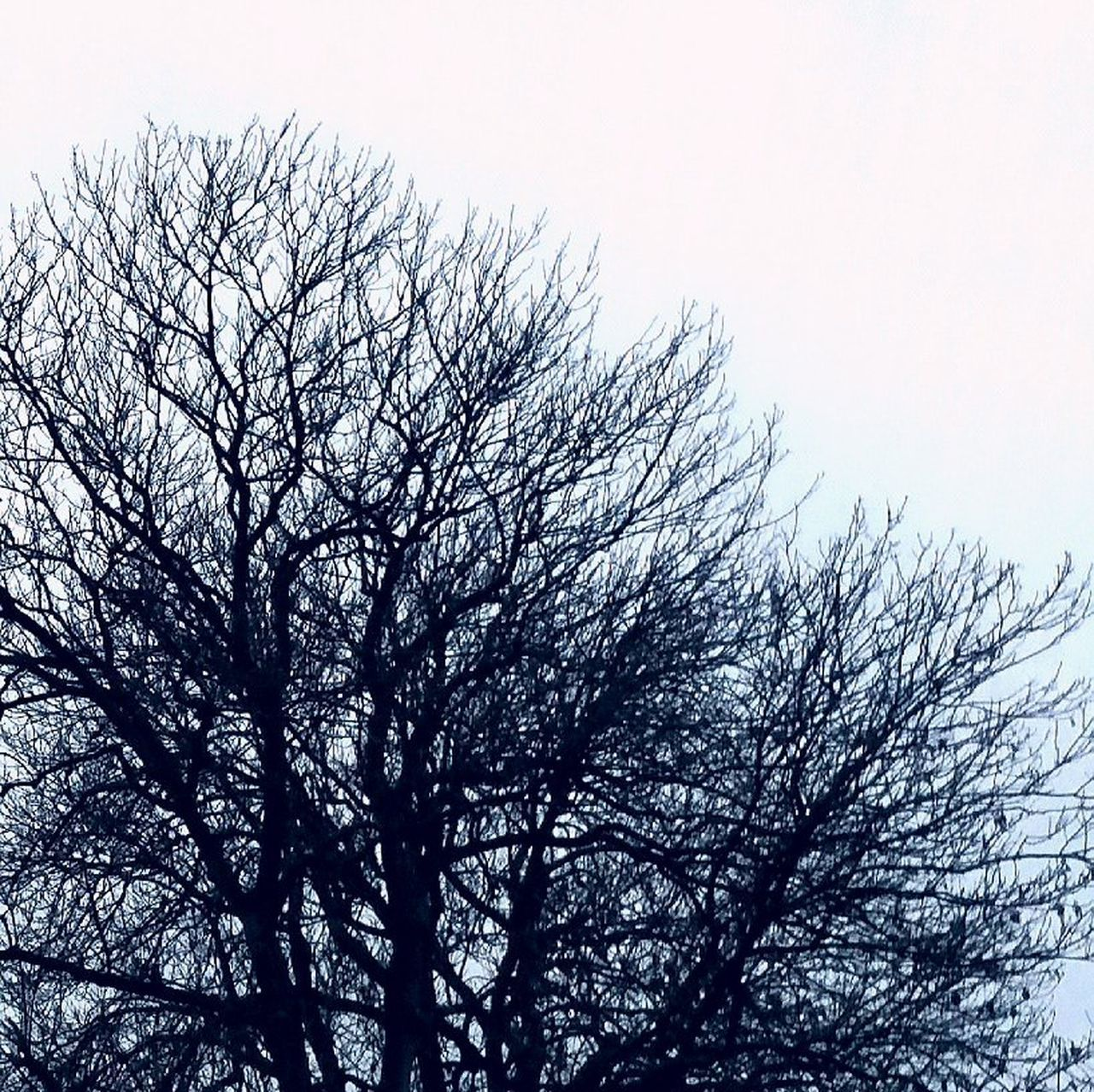 low angle view, bare tree, tree, sky, no people, branch, clear sky, nature, outdoors, beauty in nature, day, tranquility, growth