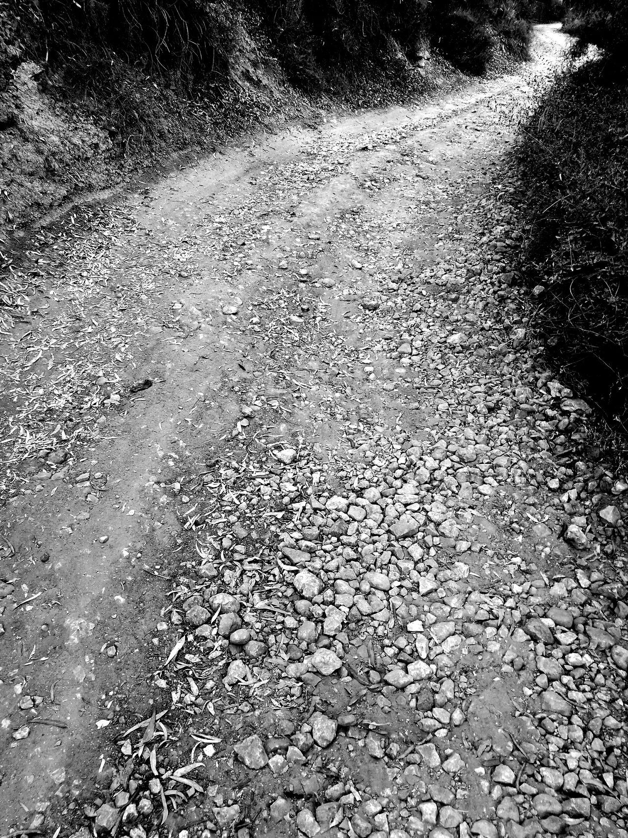 Blackandwhite Sentiero nei Giardini Kolymbetra Nature. Path in Kolymbetra Gardens Monochrome Photography Monochrome Monochrome Photograhy Welcome To Black