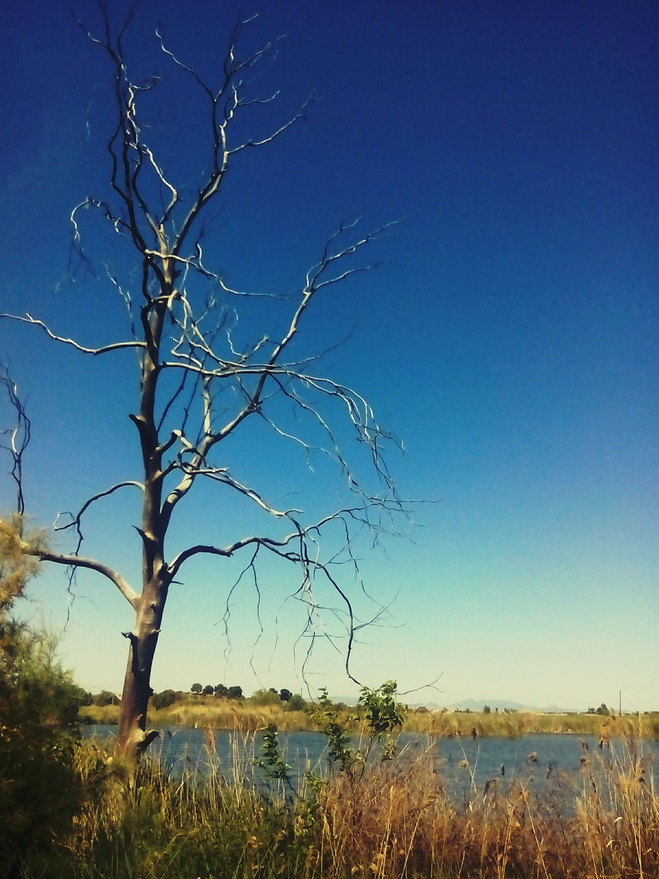 Landscape_photography Landscape_Collection Taking Photos Tree_collection  Nature Dry Tree Lake View Enyoing The View