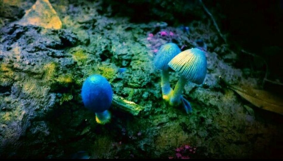 Immanence Mushroom Haven Fate's Forest Mushrooms Mushroom Wild Mushroom Wild Mushrooms Sureal Surreal Creative Light And Shadow