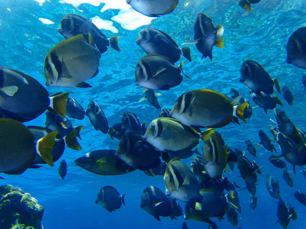 Blue Sea And Clear Water Fish Nature Photography Summer Views UnderSea Underwater Underwater Photography Water World