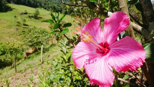 Walking Alone... Taking Photos Peace In Your Heart Flowerlovers Flowers,Plants & Garden Relaxing Enjoying Life