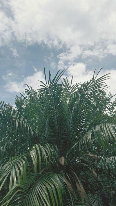 33°C Outdoors Sky Nature Buenosairesphoto Palmtree Cloud - Sky Sommergefühle