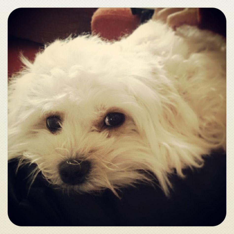 Dog Hi! Dear Friends