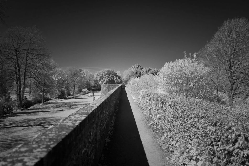 The Way Forward Nature Tree No People Day Outdoors Beauty In Nature Sky Infrared