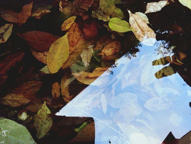 Leone Filter  Autumn Colors Reflections Secret Garden