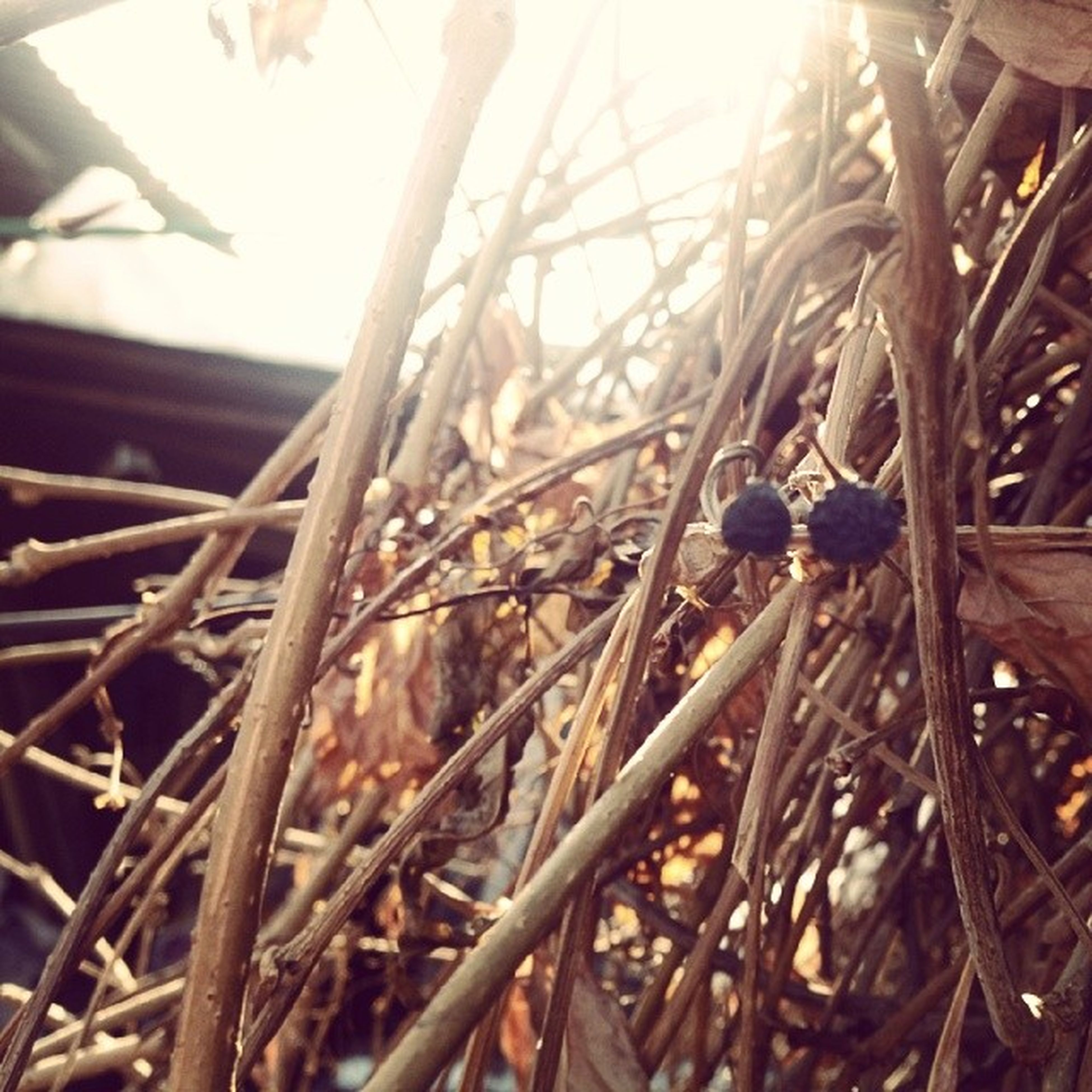 close-up, focus on foreground, sunlight, selective focus, metal, indoors, wood - material, day, hanging, no people, rope, abundance, large group of objects, stack, agriculture, fence, nature, metallic, still life