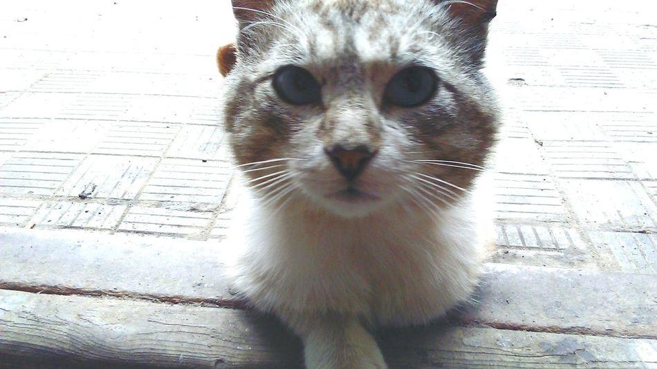 Cat Всетажекотейка