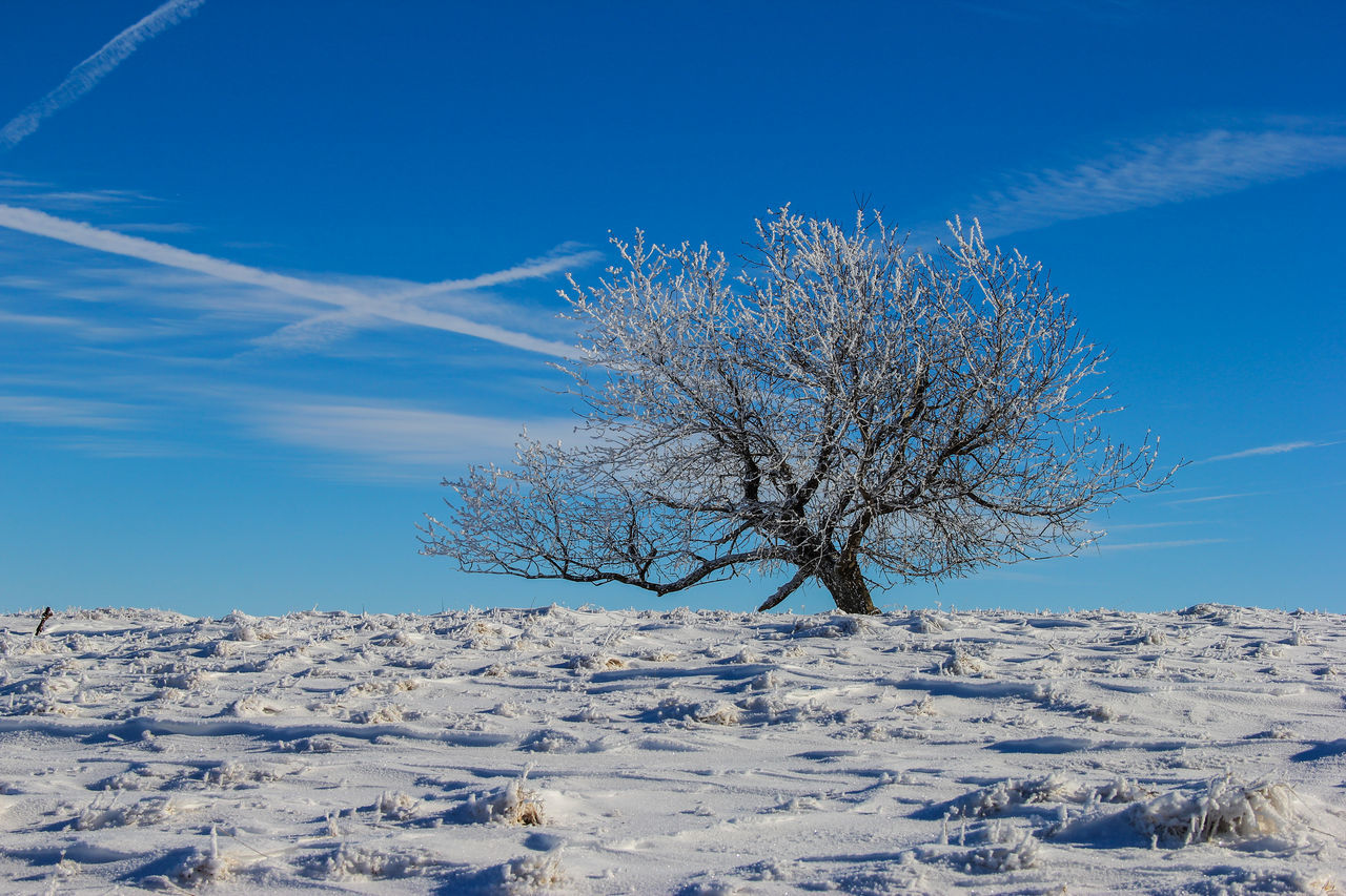 The Leaning Tree Blue Sky Cold Frost Frosty Frozen Tundra Leaning Pasture Snow Tree Tundra Winter Winter Trees Winter Wonderland First Eyeem Photo