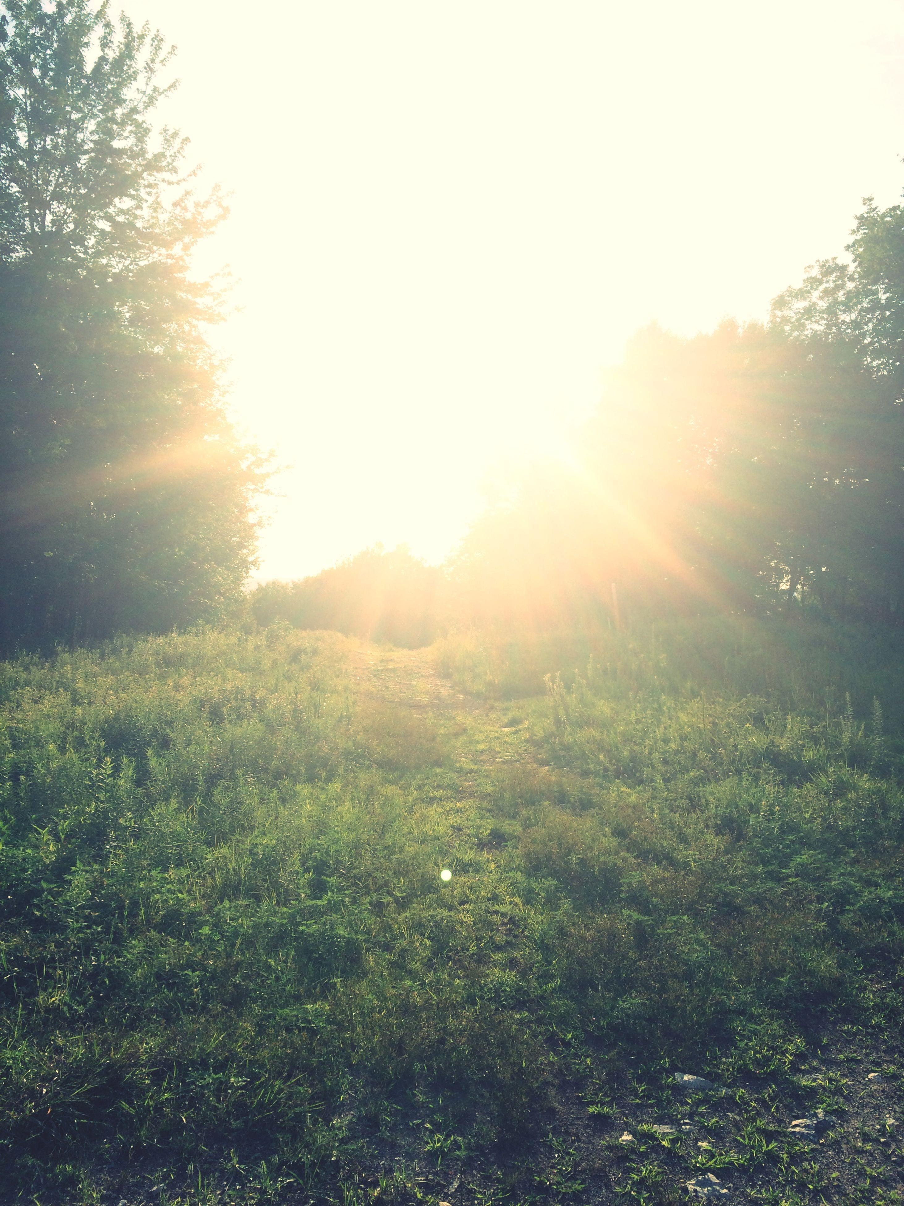 sun, sunbeam, sunlight, lens flare, tree, tranquil scene, tranquility, clear sky, beauty in nature, growth, scenics, nature, landscape, field, bright, grass, sunny, sky, sunset, idyllic