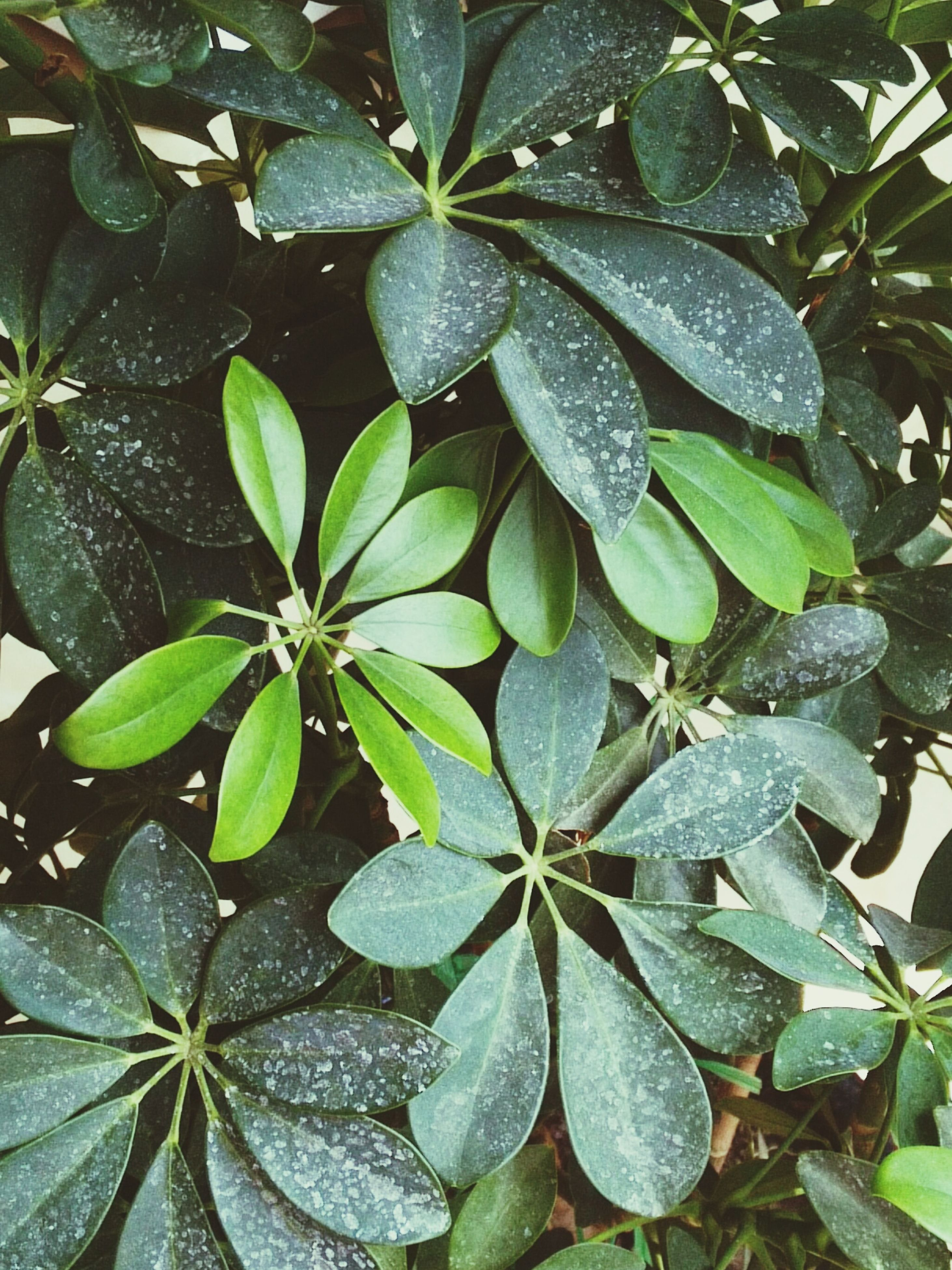 leaf, drop, plant, nature, growth, green color, close-up, day, wet, water, beauty in nature, fragility, freshness, outdoors, raindrop, no people, periwinkle
