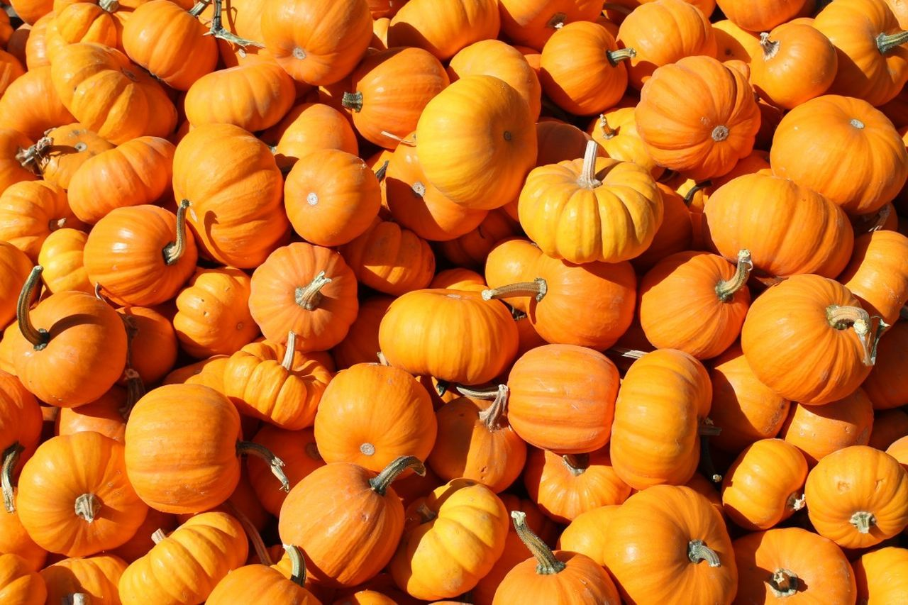 Beautiful stock photos of pumpkin, Abundance, Backgrounds, Day, Full Frame