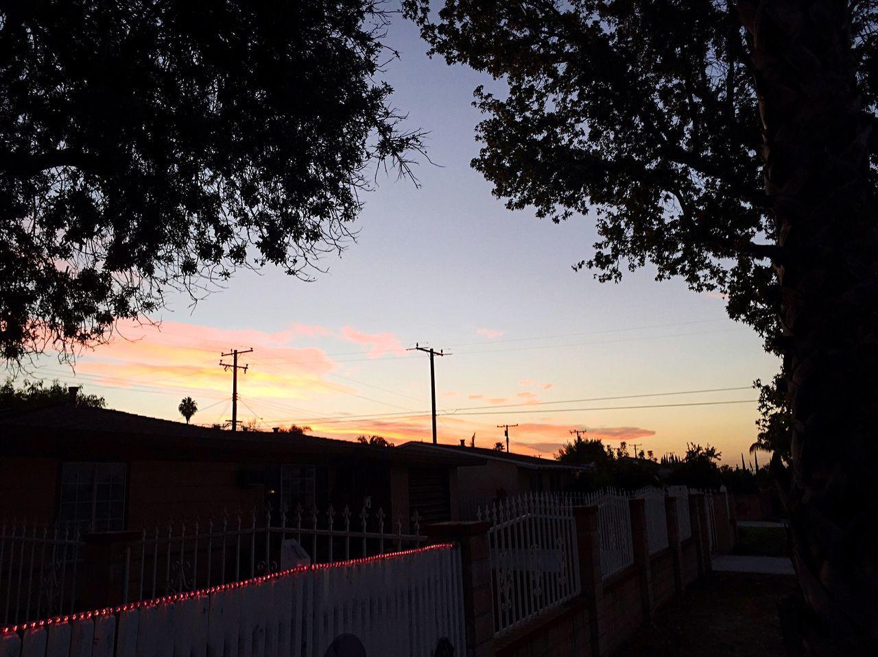 Cloud Pink Pink Skies Tree