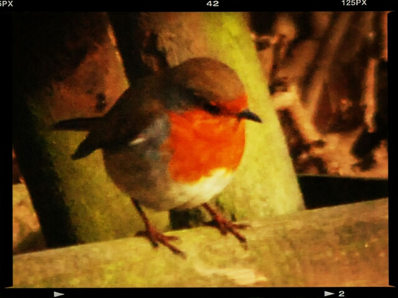 Taking Photos ❤ Little Robin Red Breast. EyeEm Nature Lover Photographing Birds