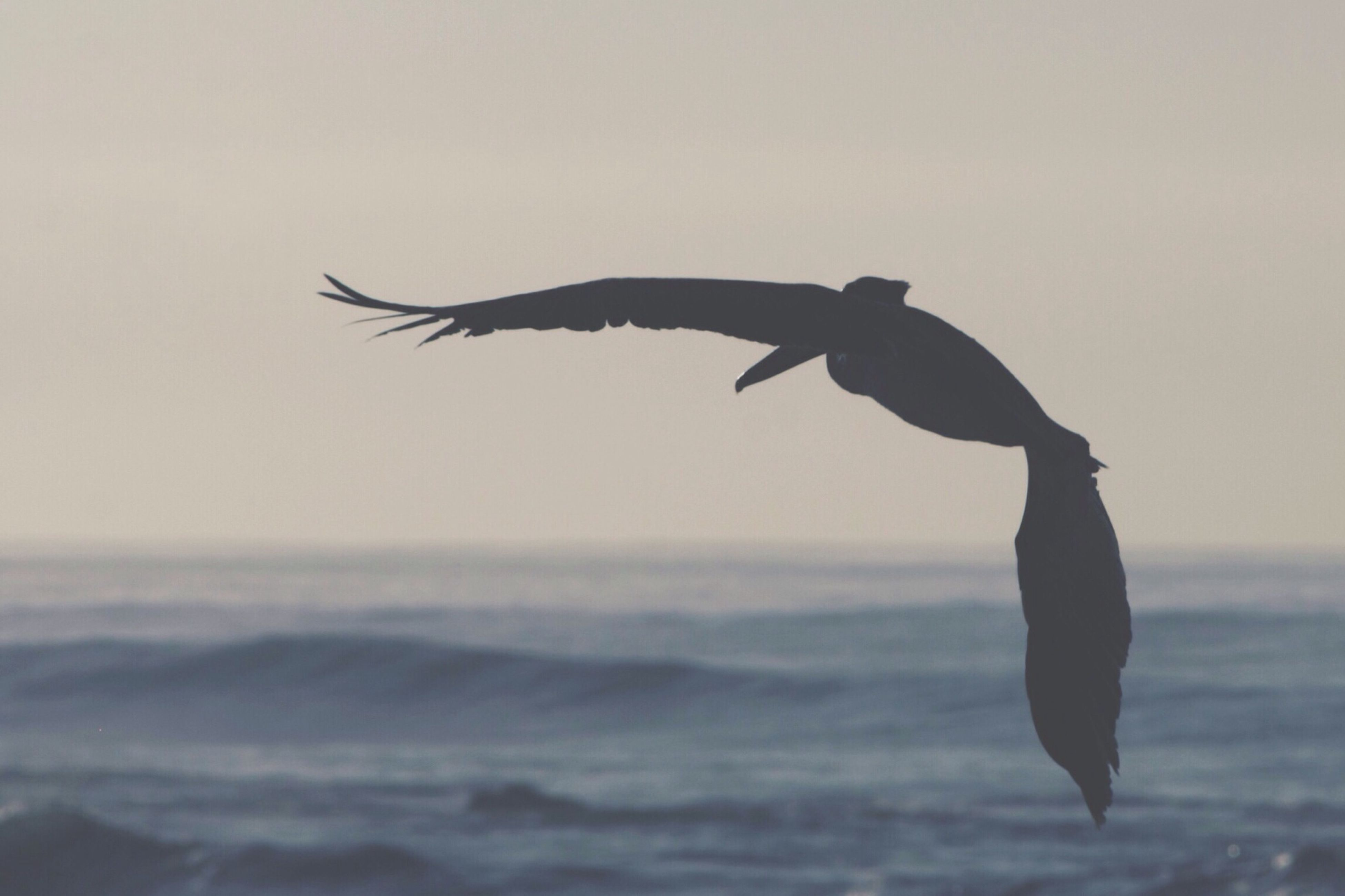 flying, animal themes, bird, one animal, spread wings, animals in the wild, wildlife, mid-air, sea, water, seagull, sky, nature, clear sky, full length, motion, copy space, silhouette, beauty in nature, horizon over water
