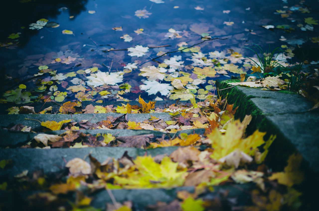 Close-Up Of Yellow Maple Leaves Floating On Water