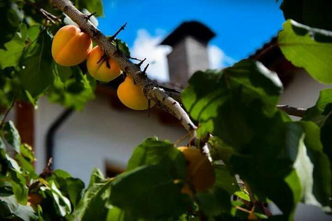 Sanvigiliodimarebbe Albicocche Südtirol Vacanzeestive Naturapower Viaggiodelcuore