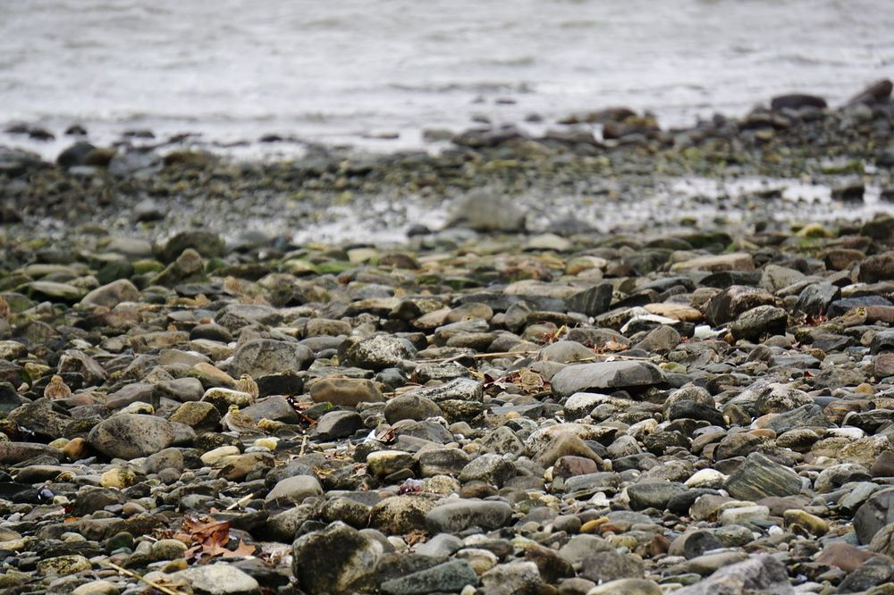 Find the Horned Larks. :) Birds Horned Lark Rocks Birds Hiding In Rocks Coast Whereswaldo Stratford CT Connecticut Connecticut Coast