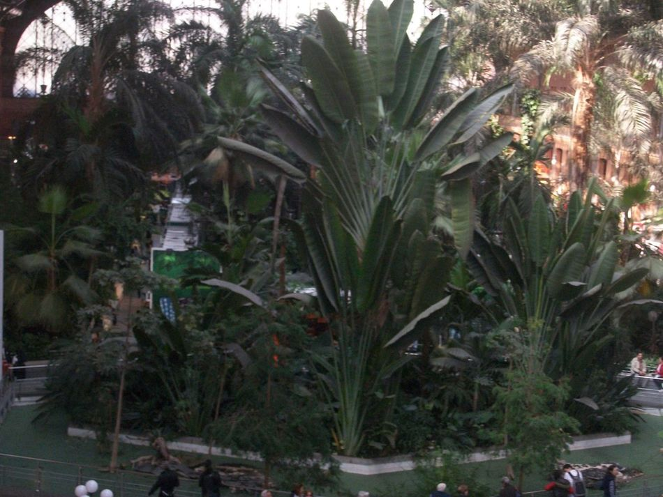 Atocha Train Station Architecture Atocha City Day Green Color Growth Madrid Nature Outdoors Palm Tree Plant Train Station Tree