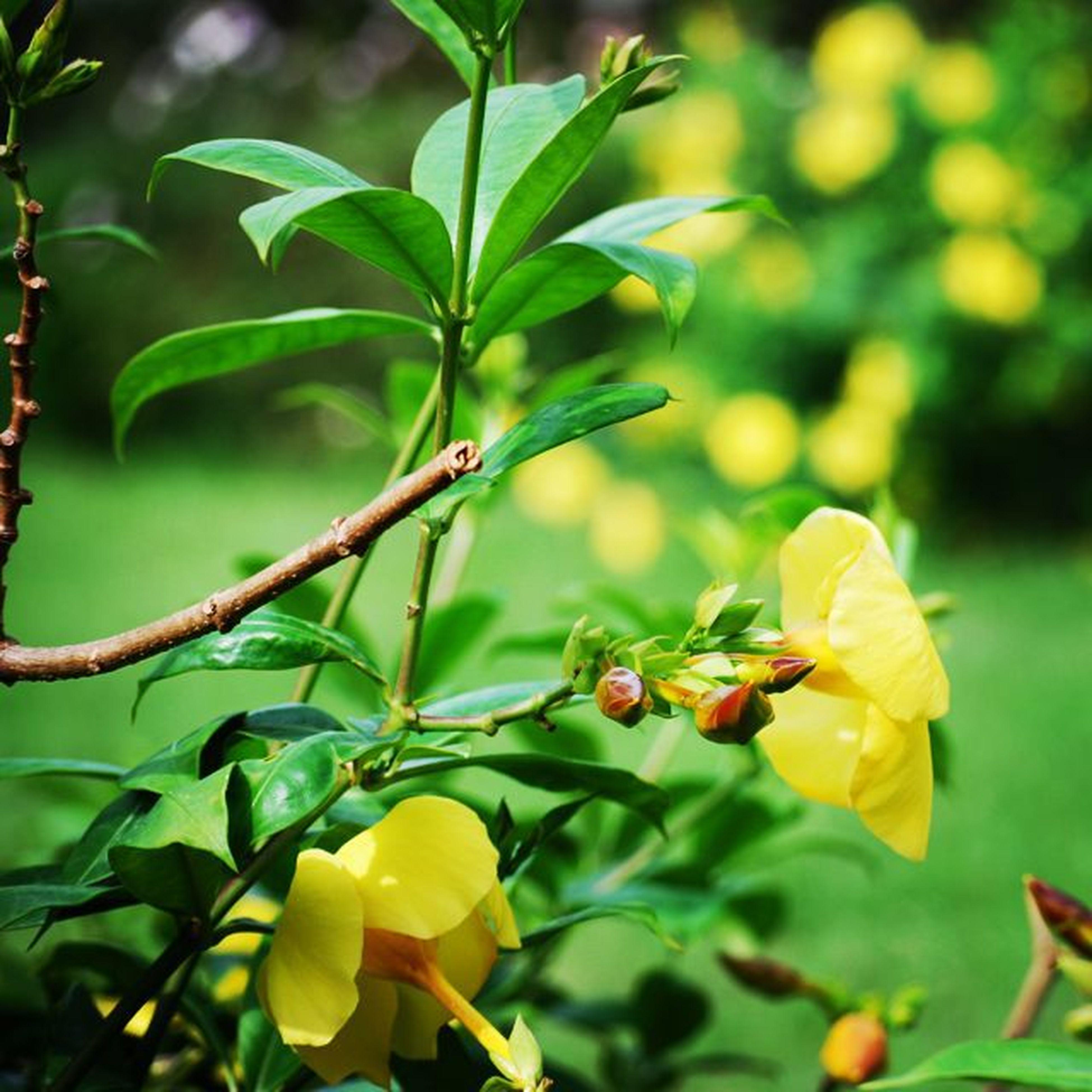 Good Evening Garden Flowergarden Bloomflowers BD_Memories Instagarden Flowersgram Follow4photo Doubletap .