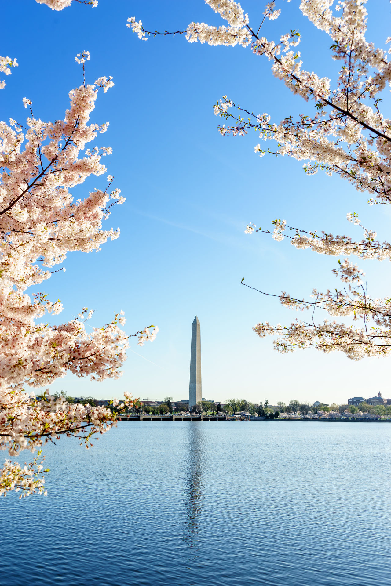 Beautiful stock photos of ostern, Beauty In Nature, Blooming, Branch, Capital Cities