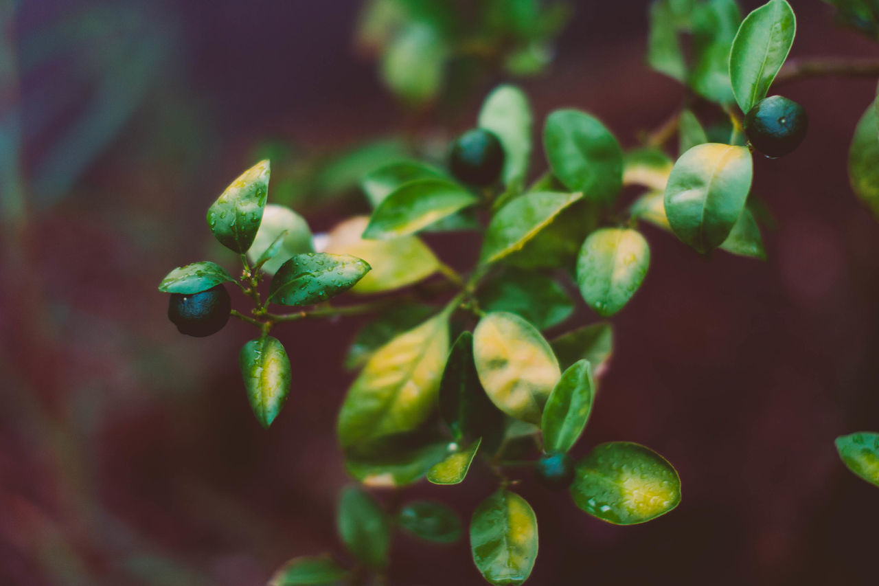 Green Color Plant Leaf No People Focus On Foreground Growth Outdoors Close-up Nature Day Tree Beauty In Nature Freshness Evanscsmith Photographerinlasvegas
