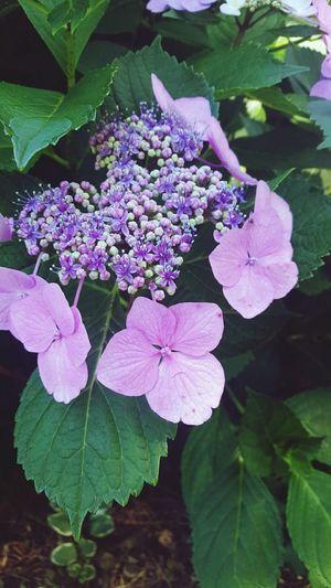 Flowers Purple Flowers,Plants & Garden Jehovahscreation