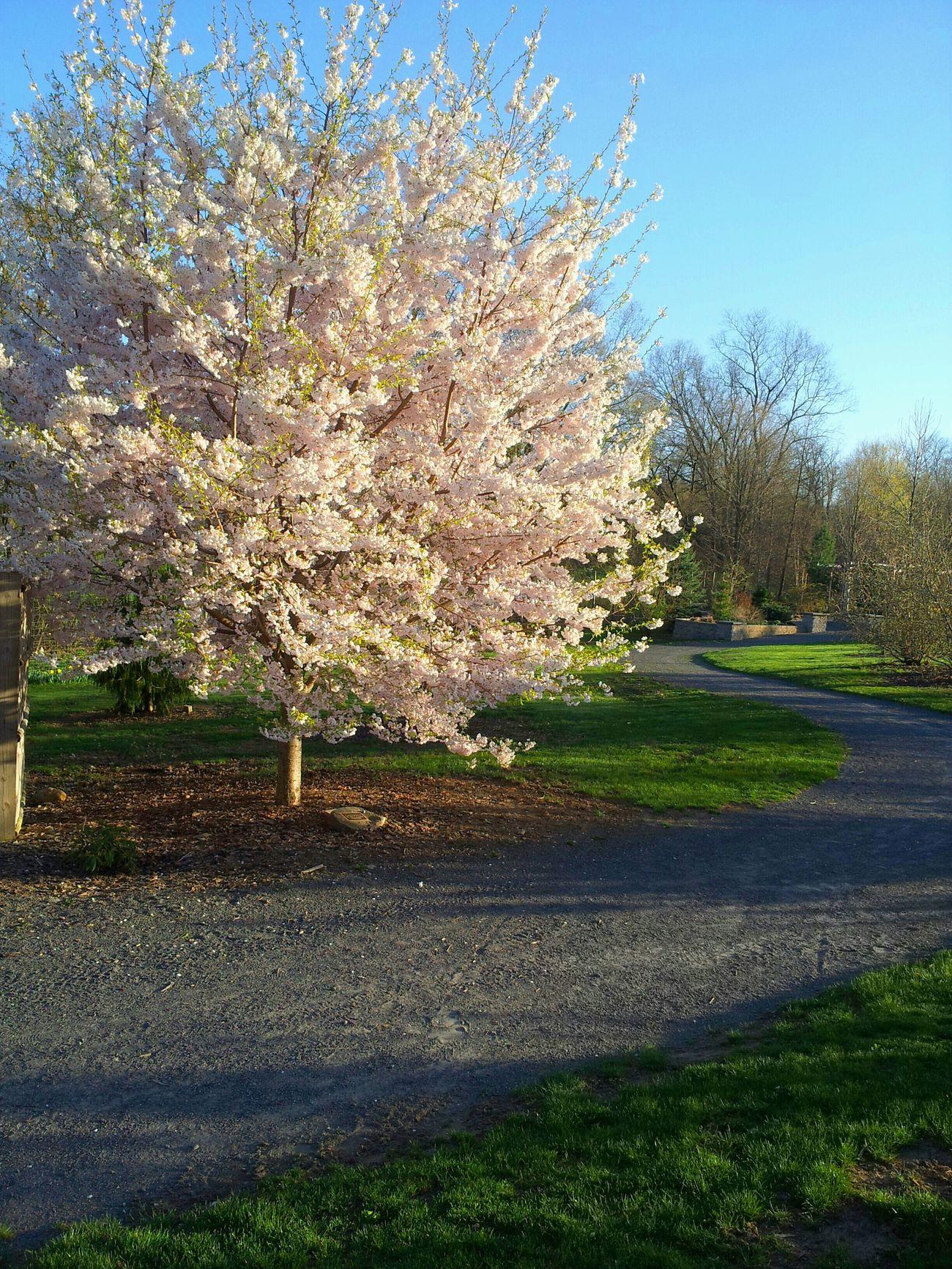 Trees Springtime Paths