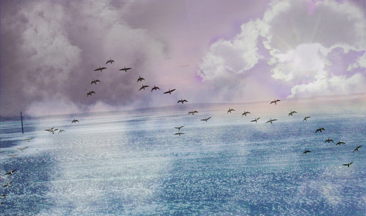 large group of animals, flock of birds, animal themes, bird, flying, sky, animals in the wild, migrating, cloud - sky, nature, wildlife, beauty in nature, no people, mid-air, animal wildlife, sea, outdoors, day, scenics, water, togetherness