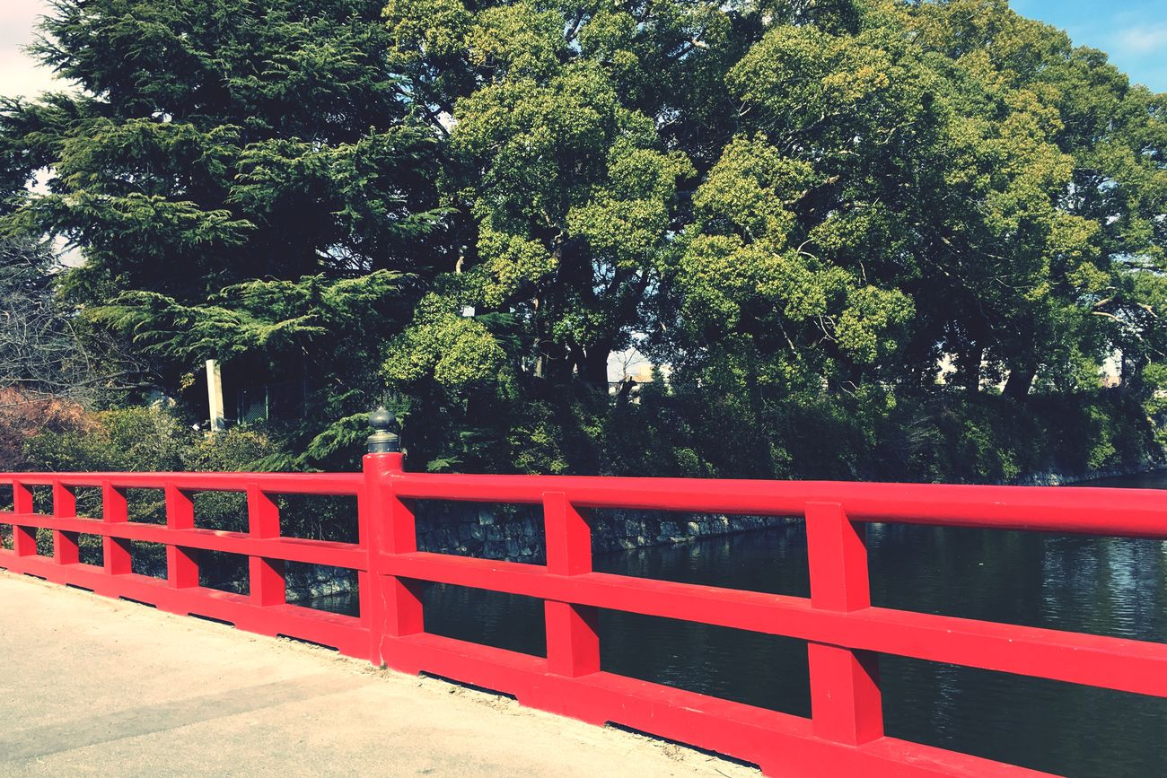Japan Japan Photography Japanese Style Japanese Garden Bridge Wood Nature Green Color Red