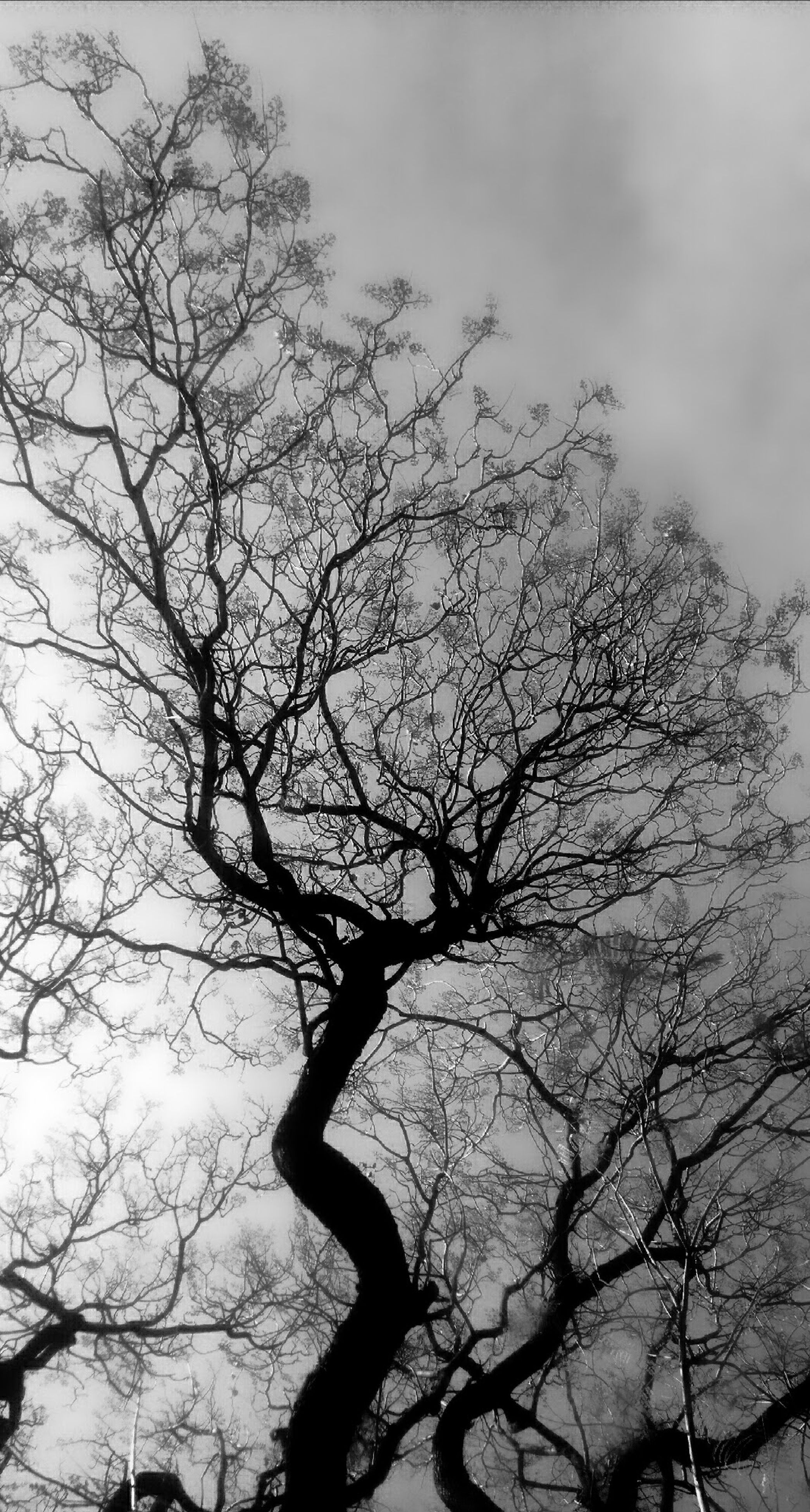 tree, nature, sky, branch, bare tree, low angle view, no people, silhouette, growth, beauty in nature, outdoors, day