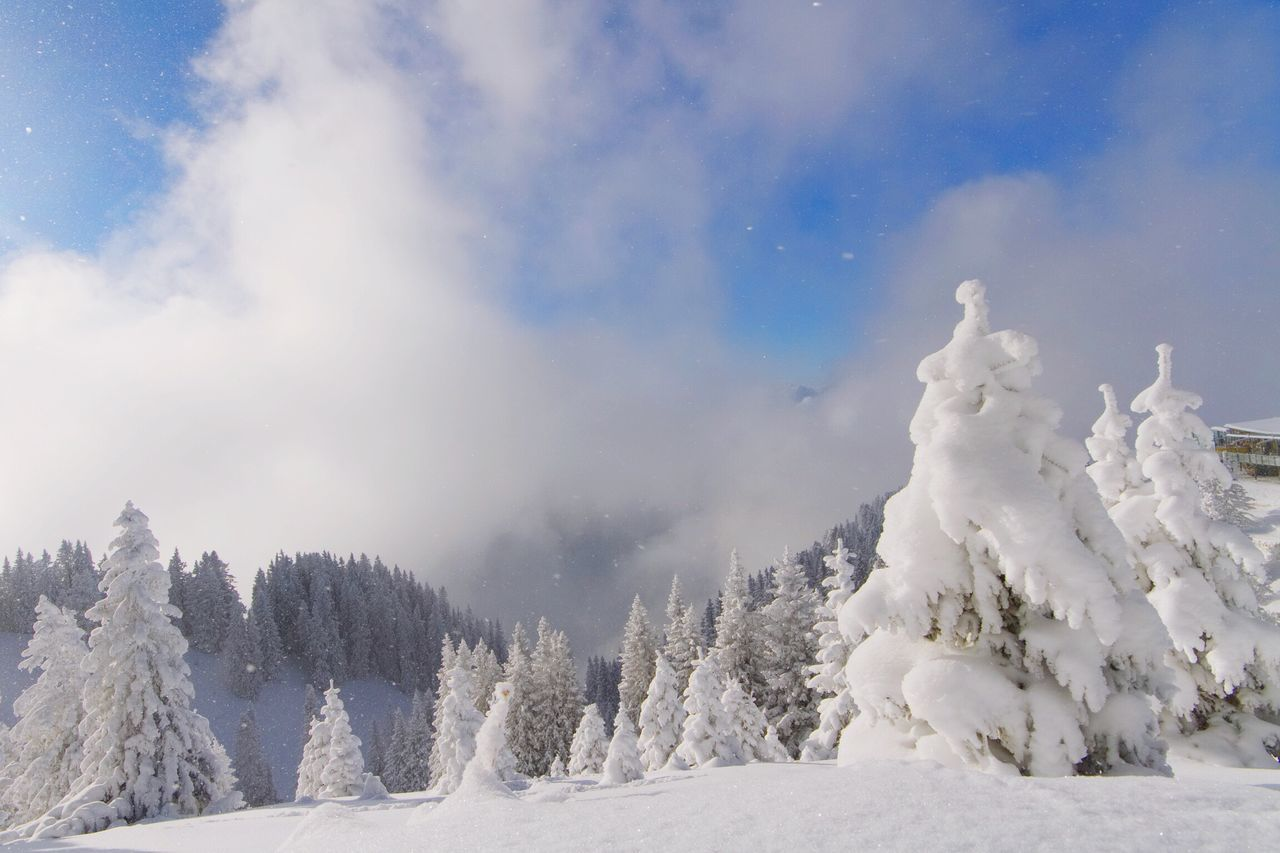 Panoramic View Of Trees On Snow Covered Landscape Against Sky