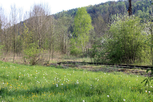 Alte Gleise Bahnschienen Beauty In Nature Frühling Gleise Grass Green Color Idyllic Landscape Nature Outdoors Plant Spring Tranquil Scene Tranquility Tree Vergänglichkeit