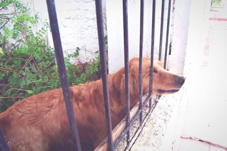 Haciendo Nuevos Amigos Animals Taking Photos Tranquility Dog Déjenme Salir Smile