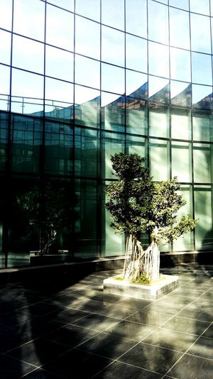 中国苴却砚博物馆场景5 Glass - Material Window Architecture Indoors  Built Structure Day Office