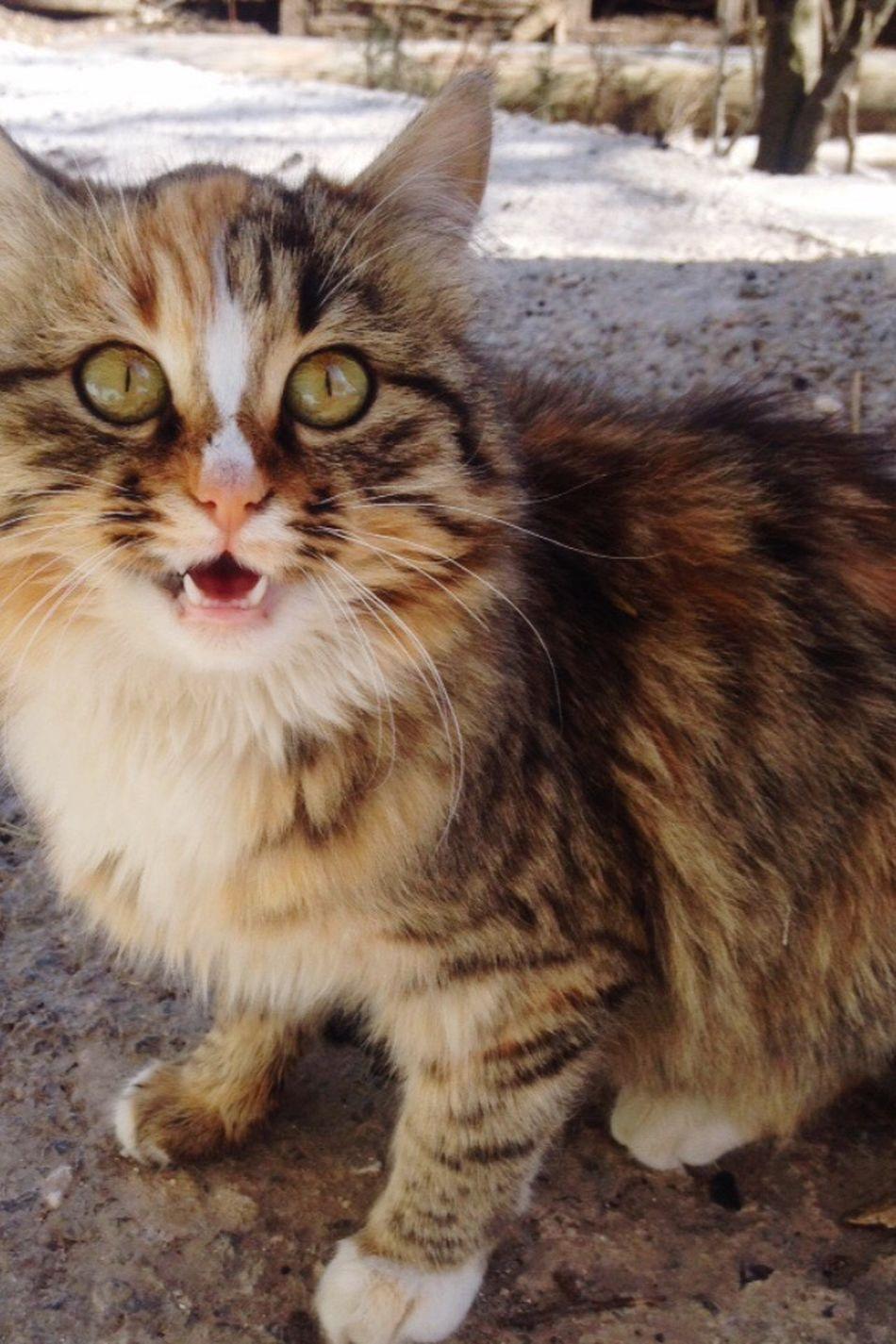 Çok konuşma ver bi poz 😂😂😂 Cat Kedicik Minnos Hello World Turkey 🐈