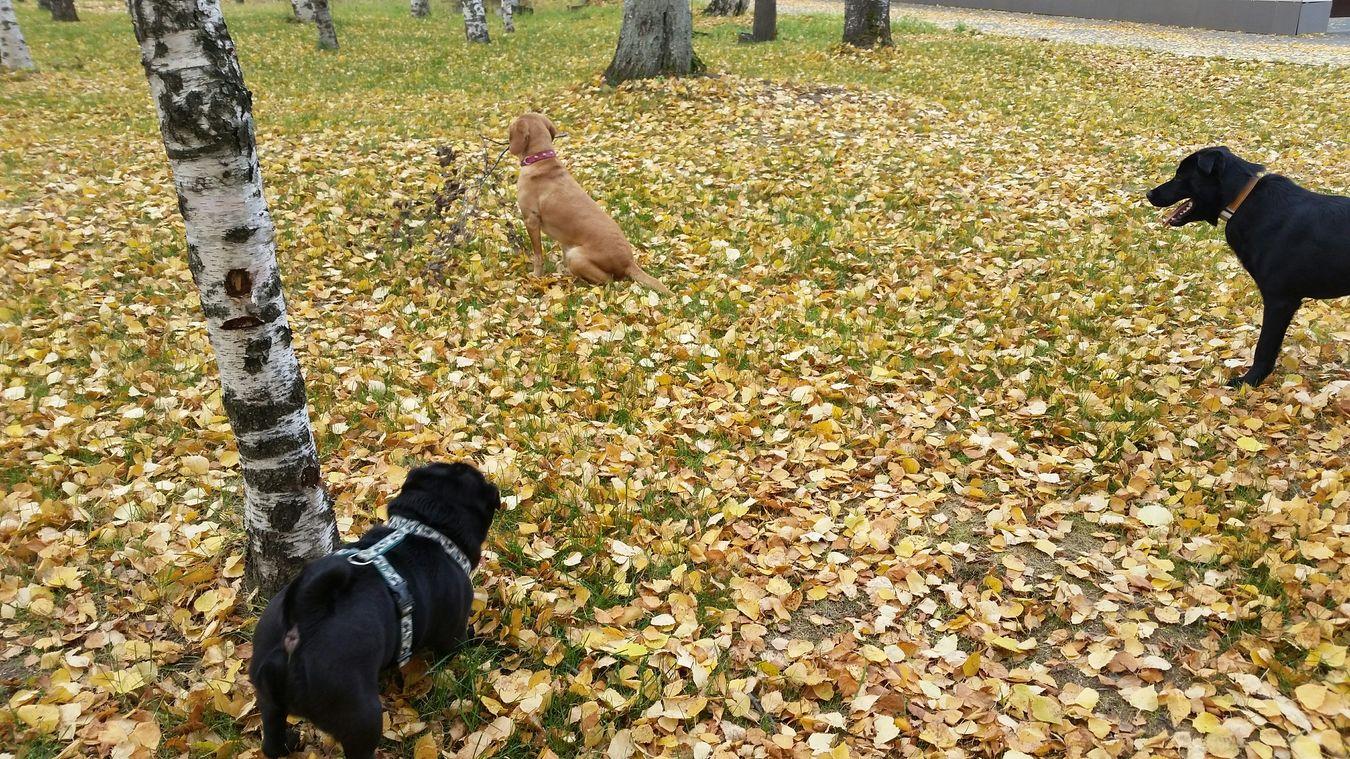 Вот она - любовьисчастье красотка собака Природа золотаяосень Dog Dogs Animals Nature Love