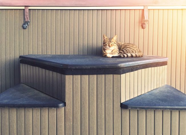 Cat Jacuzzi  Stairs Sun