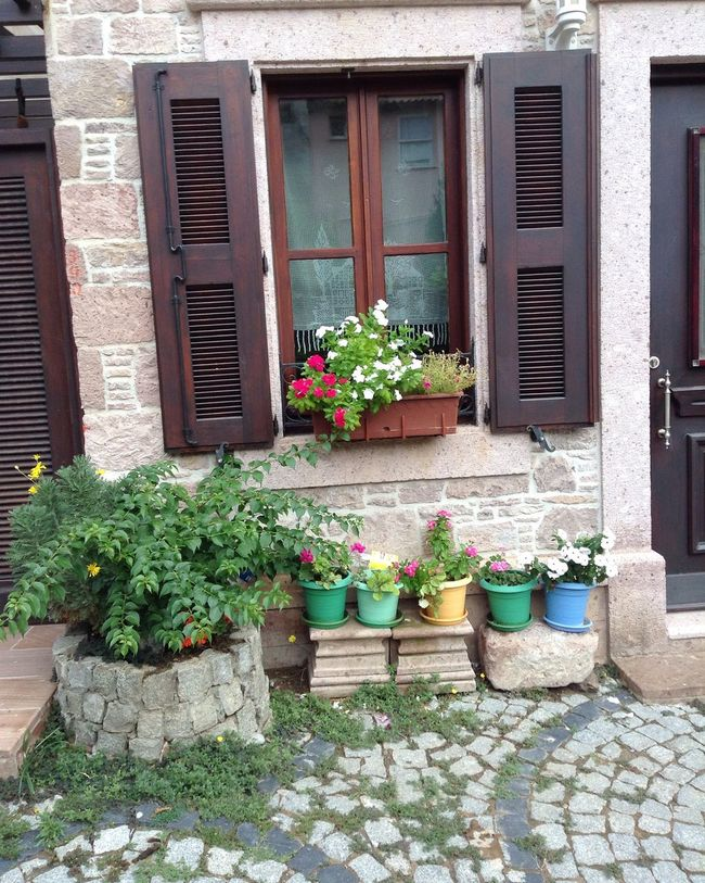 Cunda Day EyeEm Best Shots EyeEm Nature Lover Flower Flowers Holiday House Pencere Turkey Türkiye Window çiçek