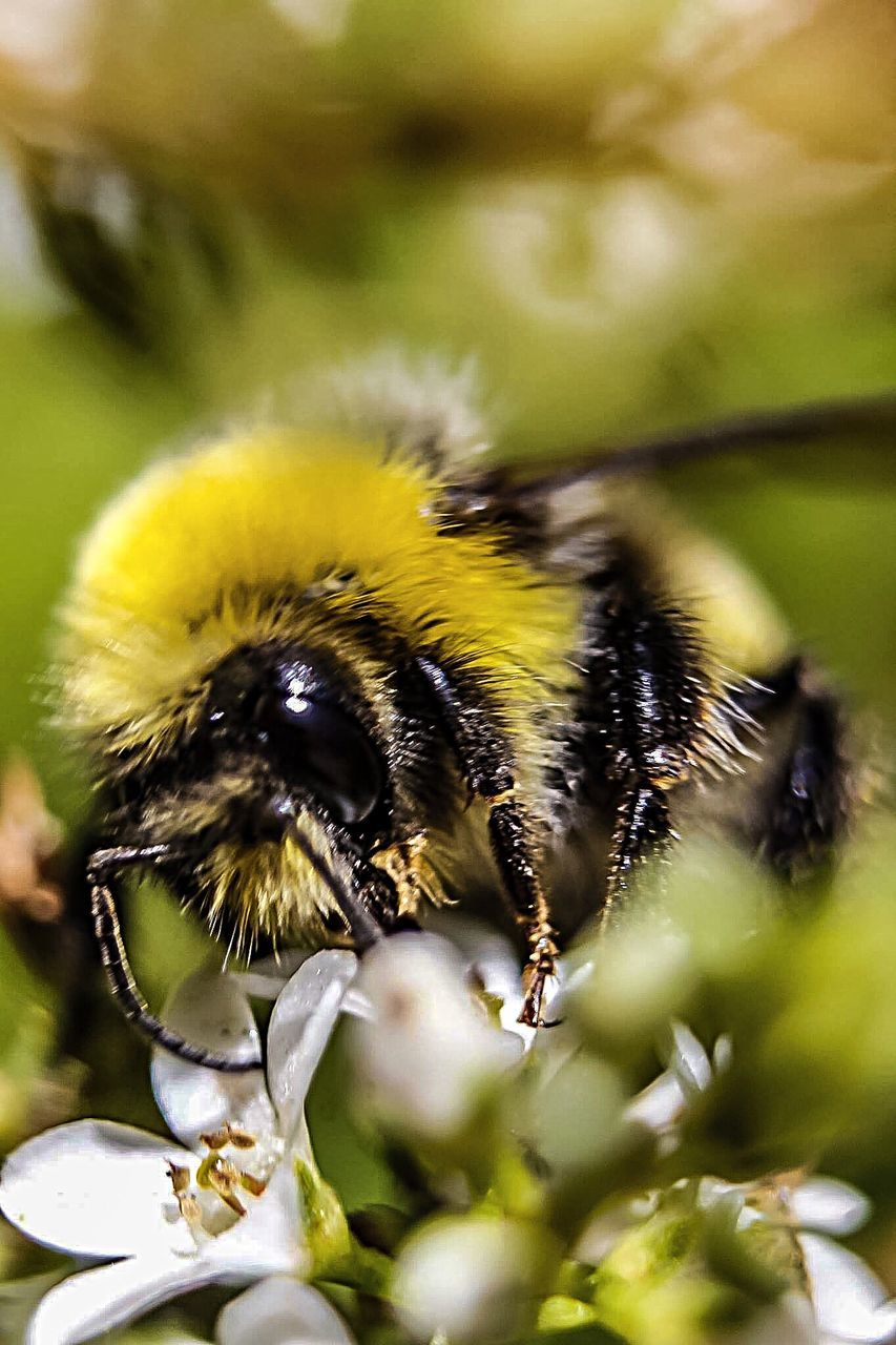 insect, animal themes, one animal, animals in the wild, flower, nature, close-up, wildlife, pollination, day, bee, beauty in nature, plant, outdoors, no people, growth, fragility, animal wildlife, yellow, bumblebee, freshness, flower head