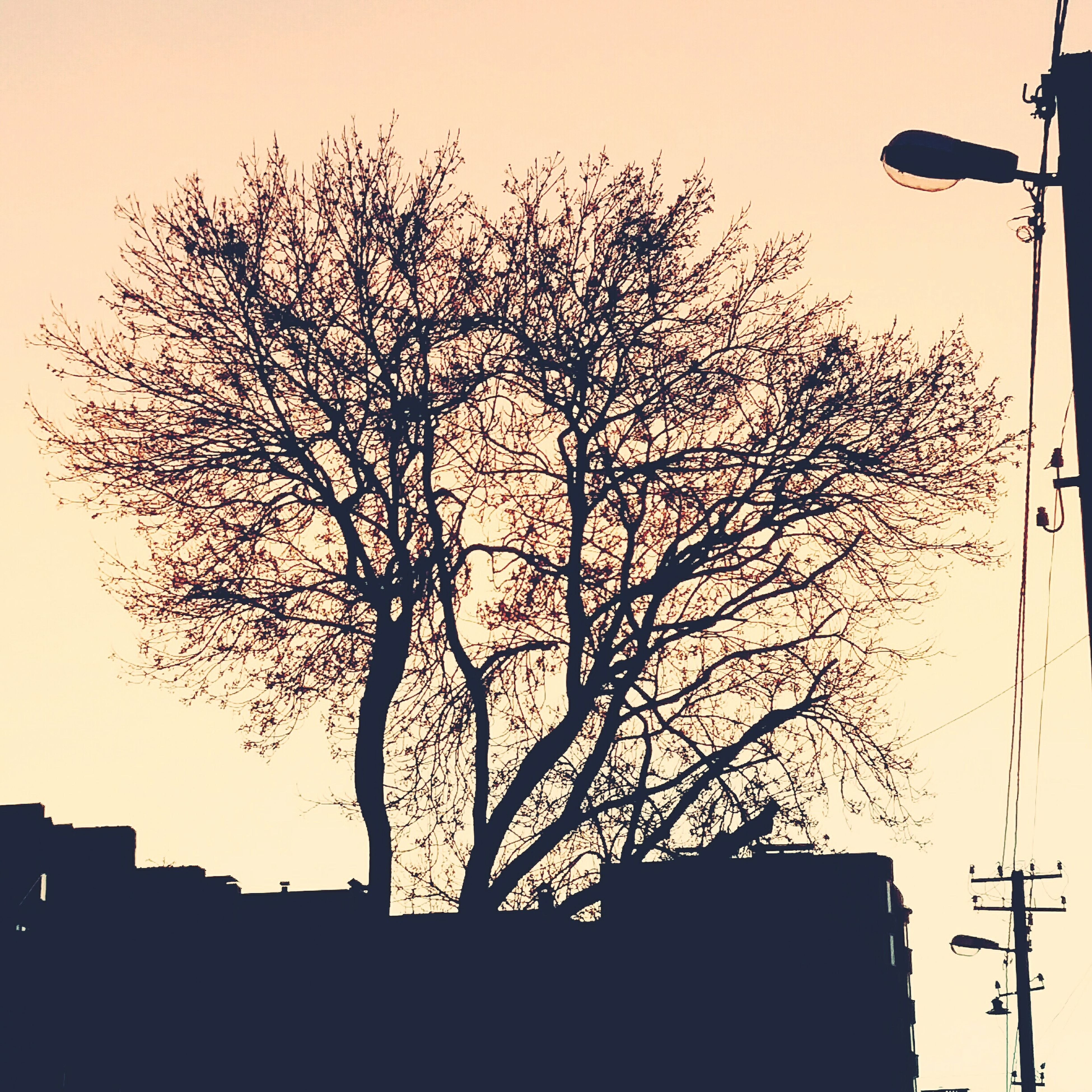 silhouette, tree, street light, low angle view, branch, bare tree, tranquility, scenics, growth, sky, outdoors, tranquil scene, nature, beauty in nature, solitude, day, no people, tall - high