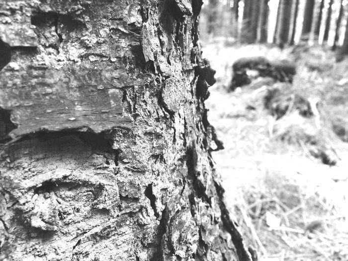 Forrest Tree TreePorn Nature