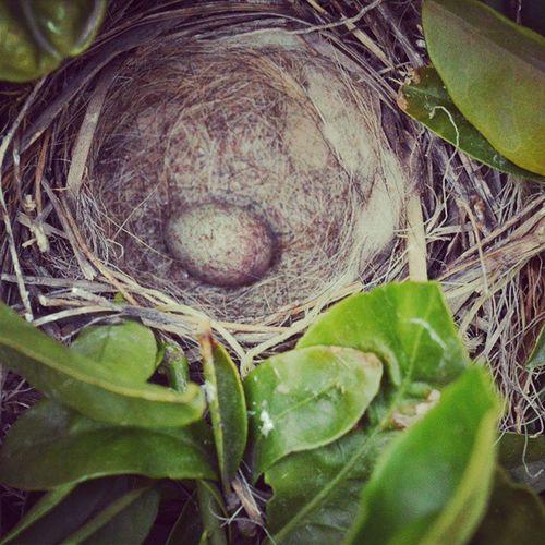 Nido Huevo Naranjo Campo pájaros natura vida life nest birdsnest instachile