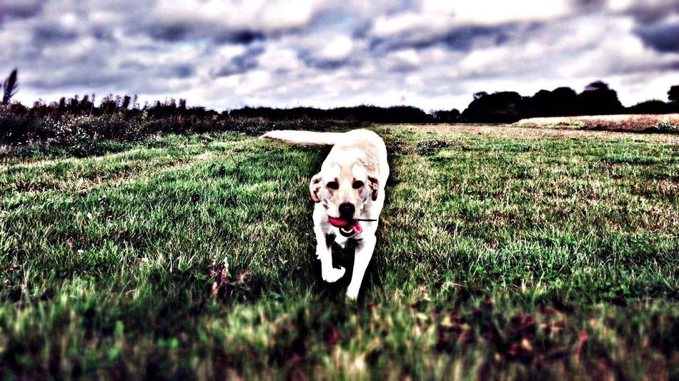 Dog here is dodo the dog in a field...