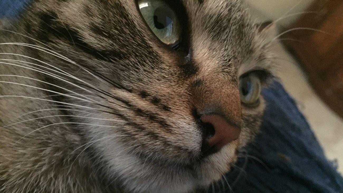 IPhone7Plus Gatto Cat Cats Nofilter
