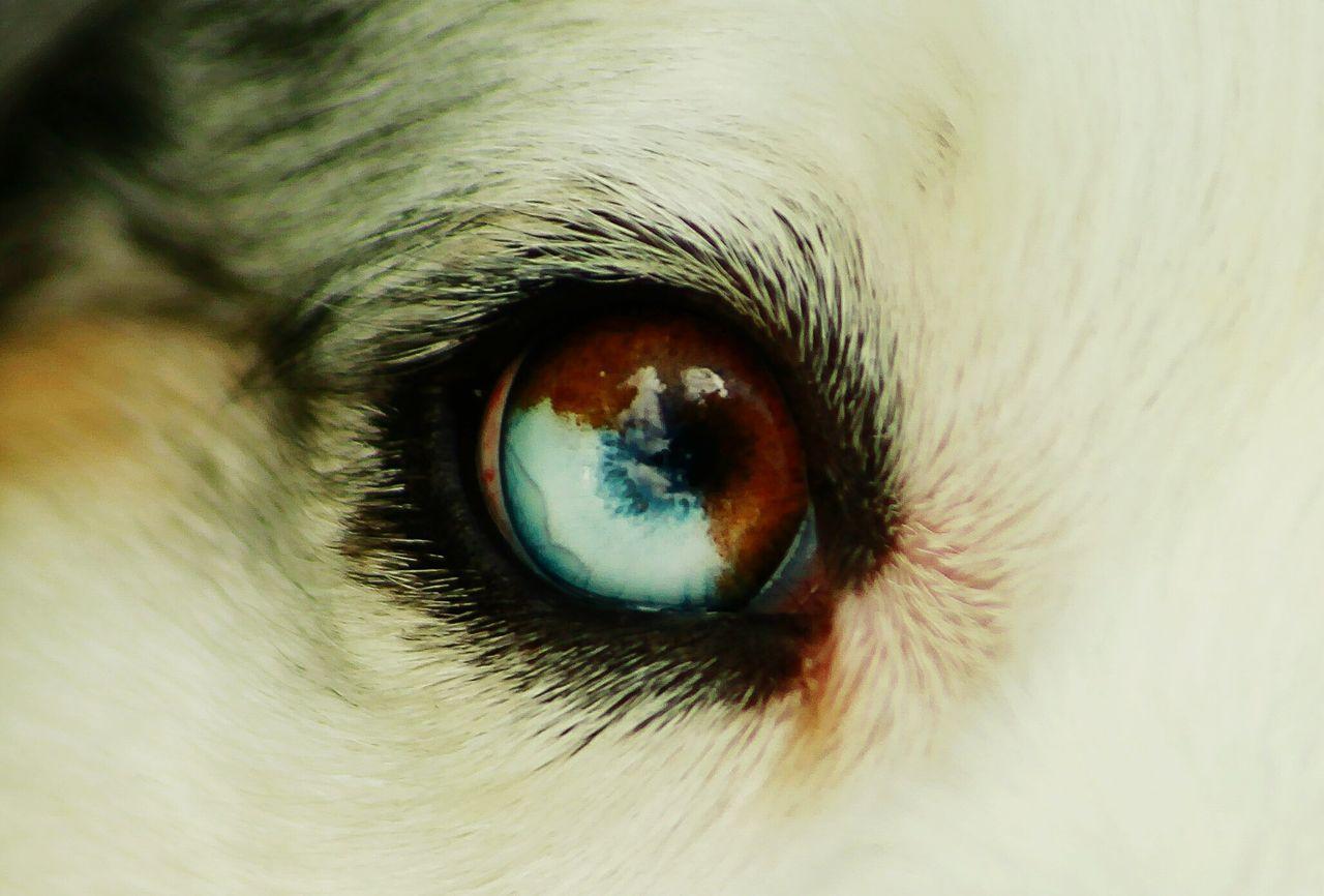 Beautiful stock photos of eyes, Animal, Animal Body Part, Animal Eye, Animal Themes