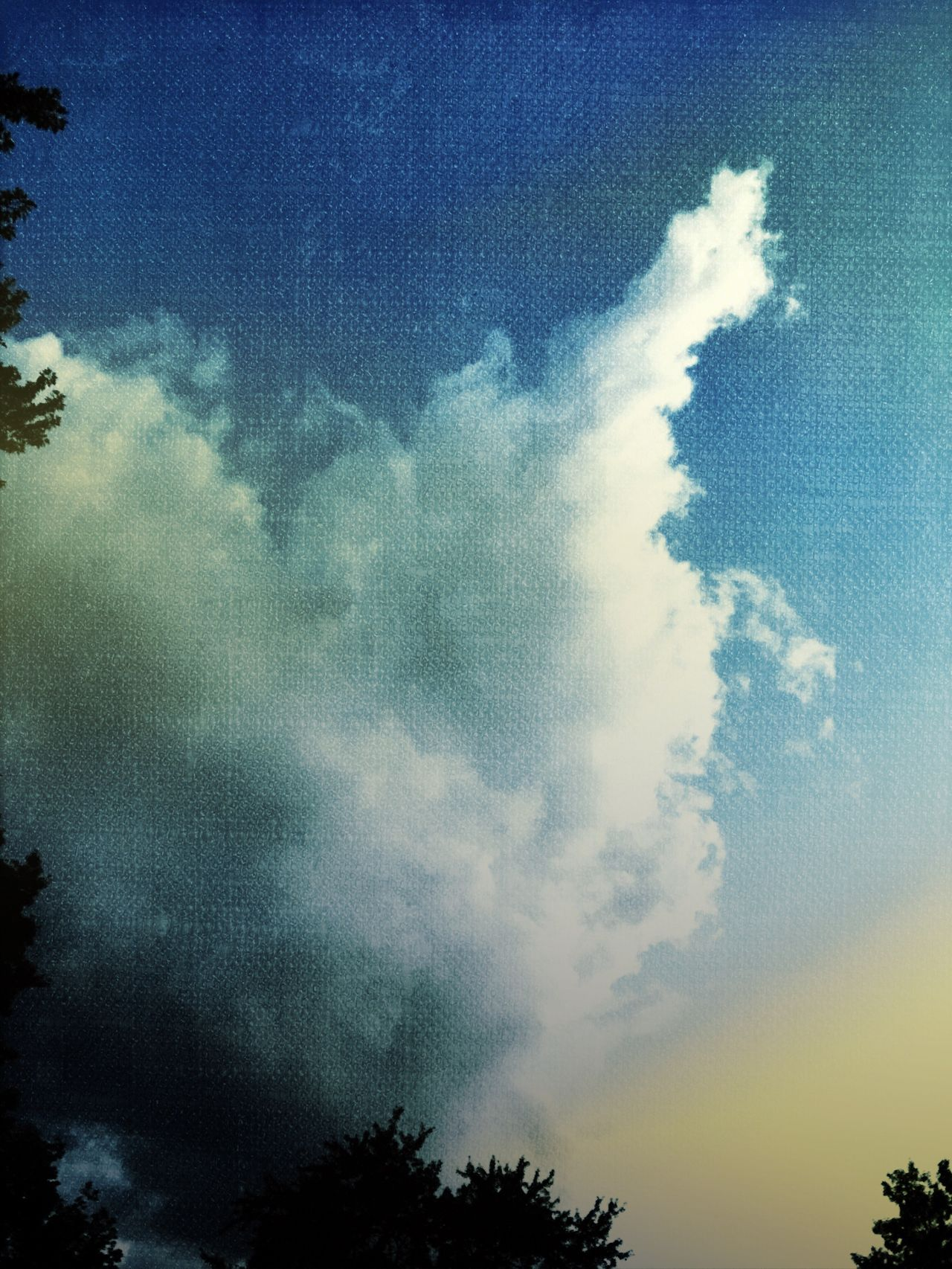 Blue sky's Sky Cloud - Sky Nature Tree Tranquility No People Outdoors Camerafilters Dramatic Sky Iphonephotography Colorphotography Sky And Clouds