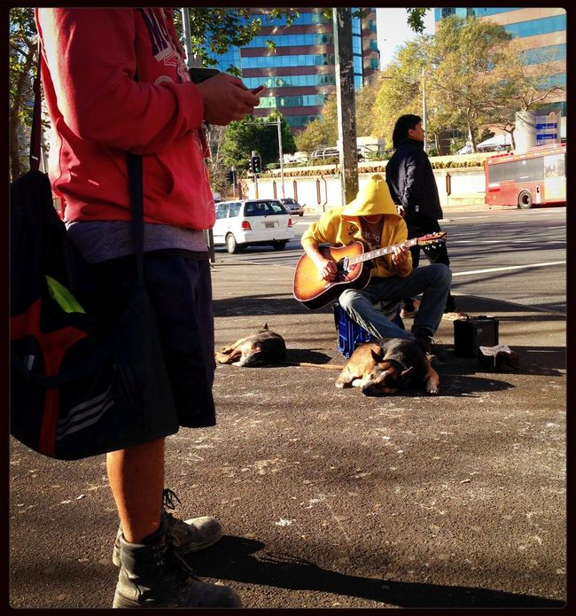 A busker and his dogs compete for attention with people's smartphones. Tough life. Streetphotography People Watching Street Sydney