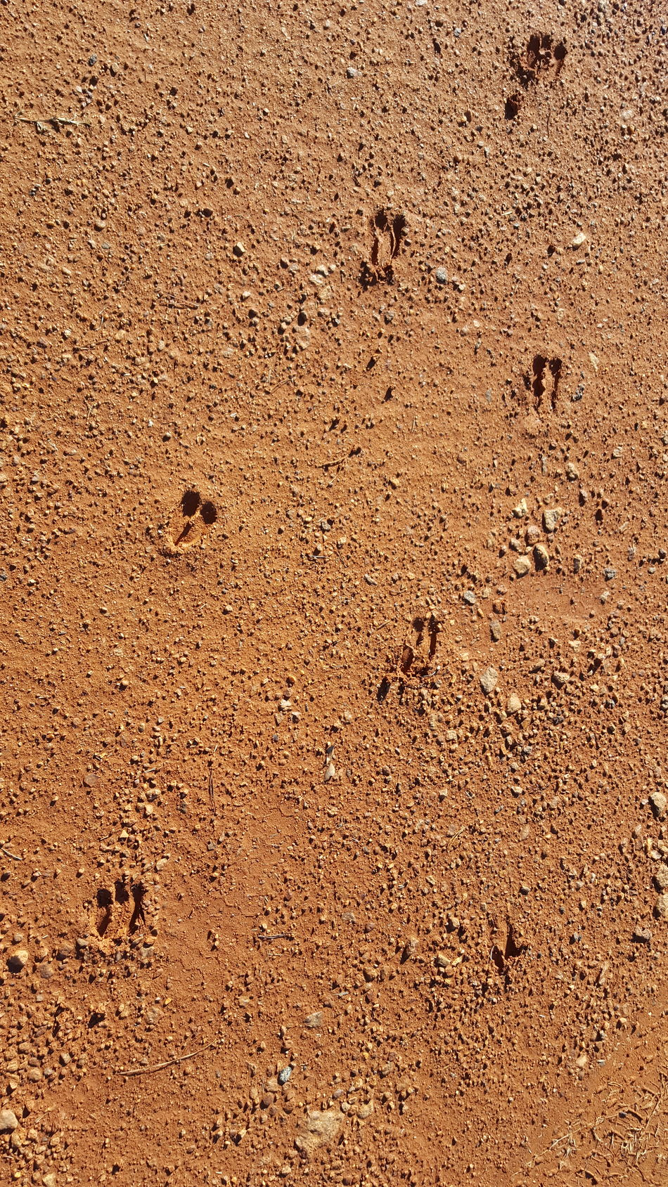 Deer tracks in the dirt Backgrounds Textured  Pattern Sand Abstract Full Frame No People Particle Close-up Outdoors Day Spartanburg, SC Love Where You Live Loving Life  Nature Deer Tracks Out For A Walk Wildlife